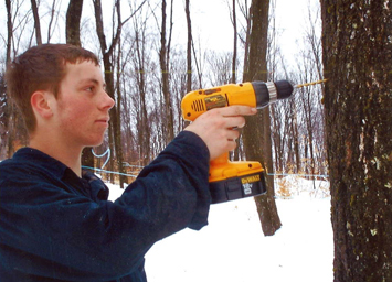 Drilling Maple Sap Lines